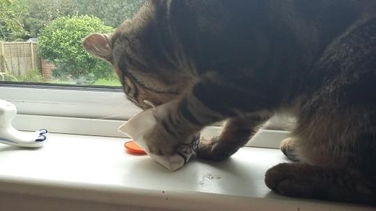 Gizmo with his FreakMEOWt Cat Nip Tea Bag