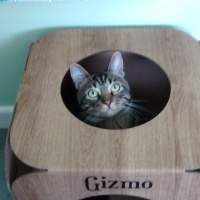 Gizmo, the birthday boy...