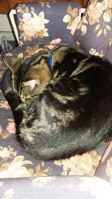 Gizmo is happy to sleep wearing his new collar!