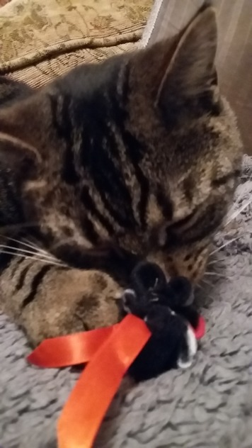 Gizmo and the Halloween Parcel!