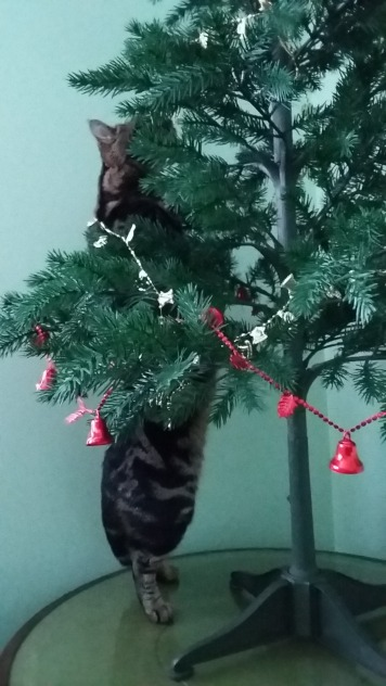 Gizmo climbing the tree