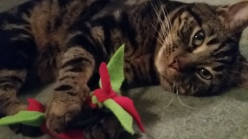 Gizmo loves this toy!