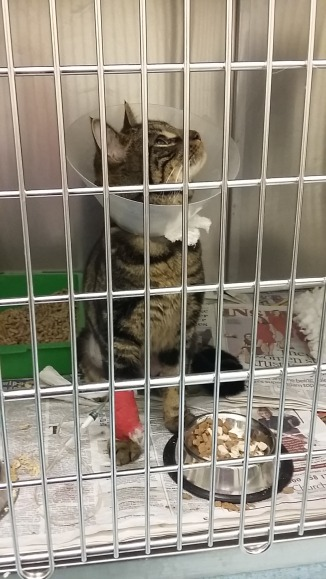 Gizmo trying to find a way out of the kennel