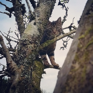 Gizmo playing hide and seek in trees