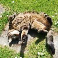 Kitty Tummy Trap... 🤭